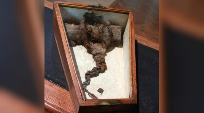 Rambut kepang yang ditemukan di bawah gereja Romsey Abbey (BBC).
