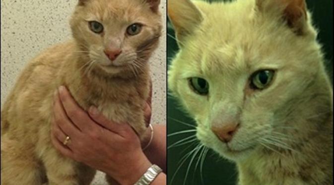 Kisah Kucing yang Hilang di Australia